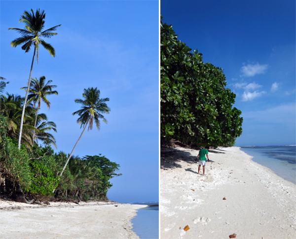 pepohon di pinggir pantai menambah keindahan