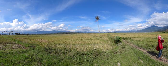 sawah penghasil beras Payau Kerinci