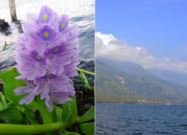 bunga air (kiri): Danau Ranau mulai cerah (kanan)