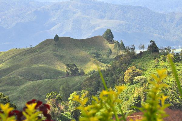 bukit hijau bagai beralaskan karpet