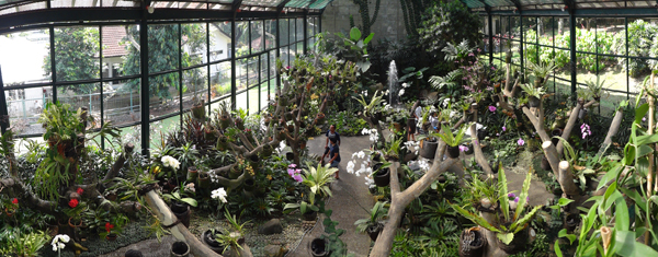 warna-warni anggrek khas Indonesia - berminat mengkoleksi?