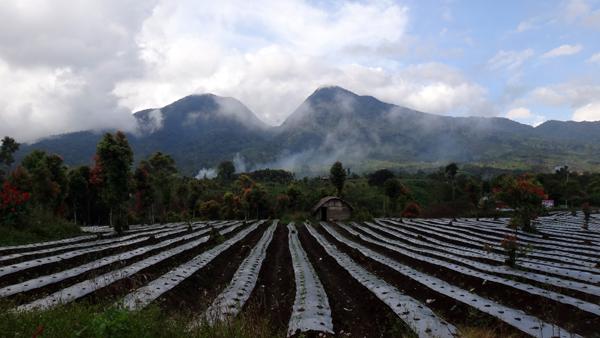 disambut pemandangan Gunung Tujuh dan kebun sayur