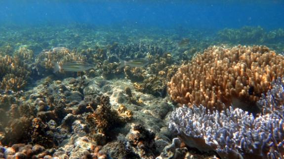 keindahan bawha laut Pulau Pahawang