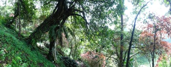 pesona hutan tropis di Telun Berasap