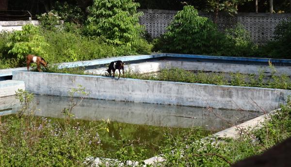 bekas kolam renang menjadi semak belukar