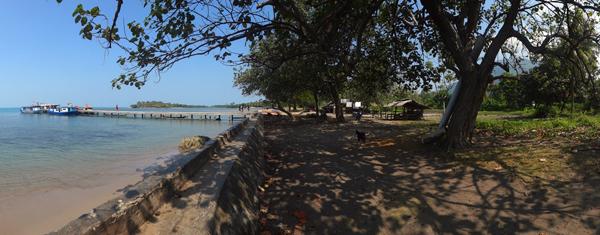 pohon rindah di tepi pantai , tempat berteduh
