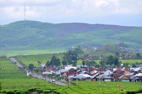 pemukiman penduduk di natara kebun teh