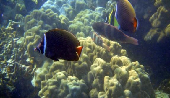 ikan-ikan besar di laut dalam