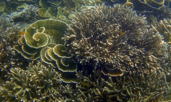 pesona terumbu karang laguna Cabe