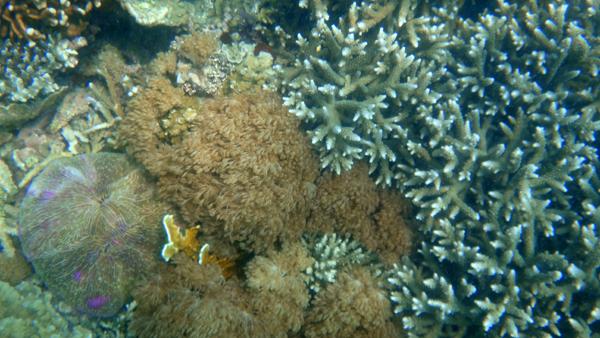 kaya ragam terumbu karang