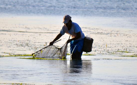 mengais rejeki-menjala ikan di pantai pelabuhan Bolok, Kupang