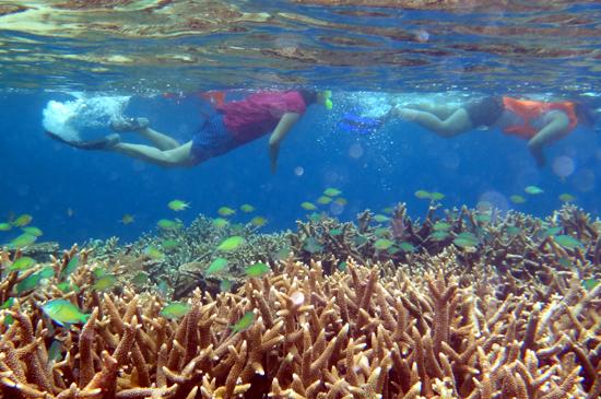Memukau - Snorkling di sekitar pulau Kakaban