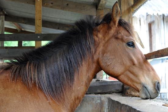 Kuda di Rumah Rusa
