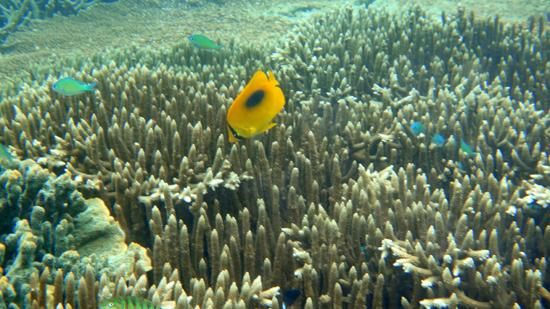 ikan warna -warni