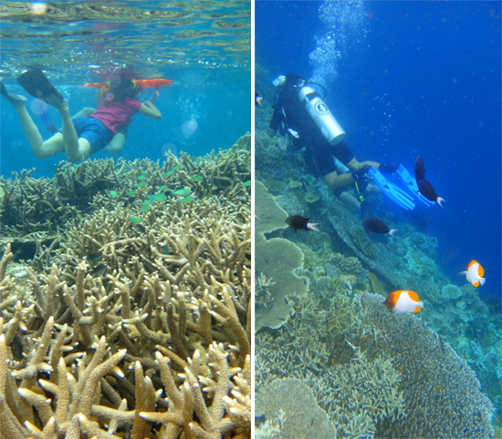 Menikmati dunia bawah laut Kakaban , snorkling (kiri), diving (kanan)