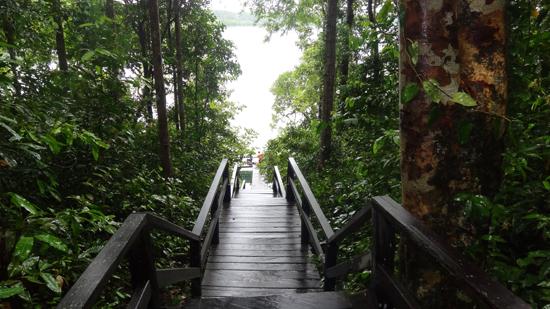 jalan dan tangga kayu di pulau Kakaban