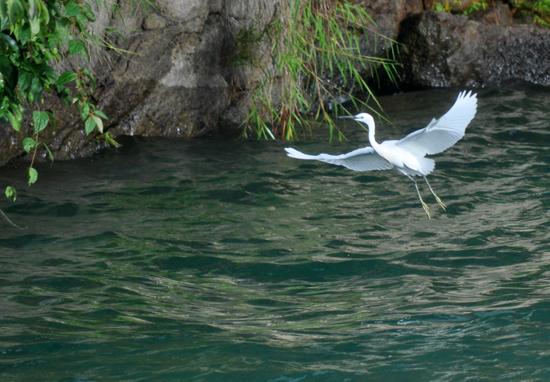 melayang indah di atas air