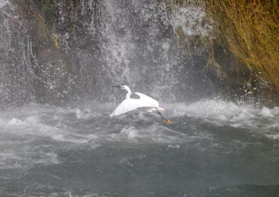 menembus air - berburu ikan pora pora