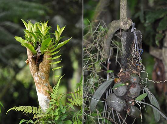 beragam tanaman hutan