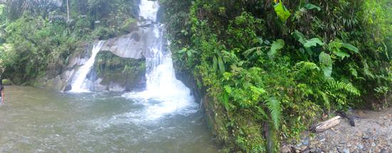 air terjun di antara semak hijau