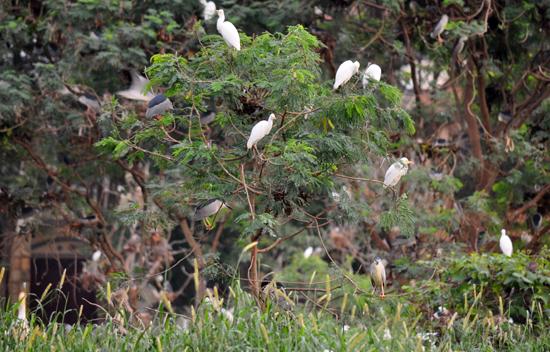 rawa kecil samping Vihara - habitat ribuan burung