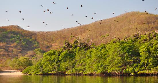 pulau Kolong - peraduan kalong di Riung