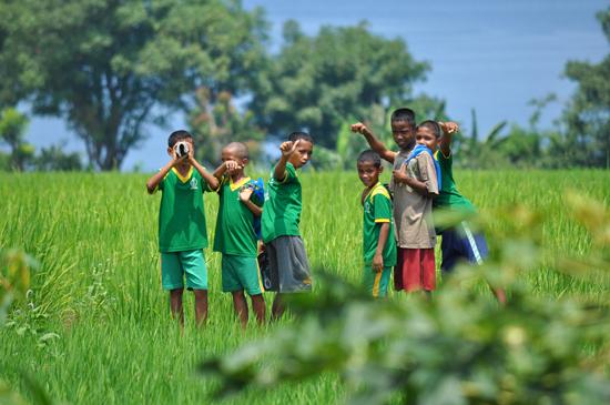 anak - anak bermain di sawah, Dintor