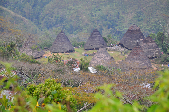 tujuh rumah tradisional - mbaru niang