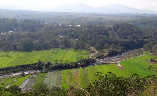 kabupaten Manggarai - lumbung padi Nusa Tenggaara Timur