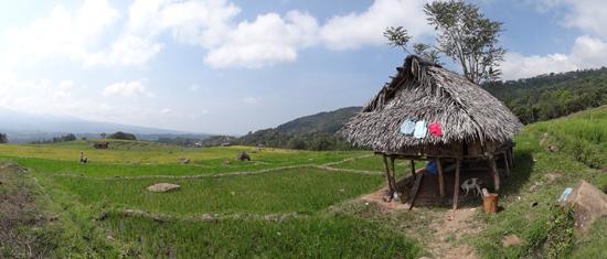 ijo royo-royo pemandangan di Manggarai