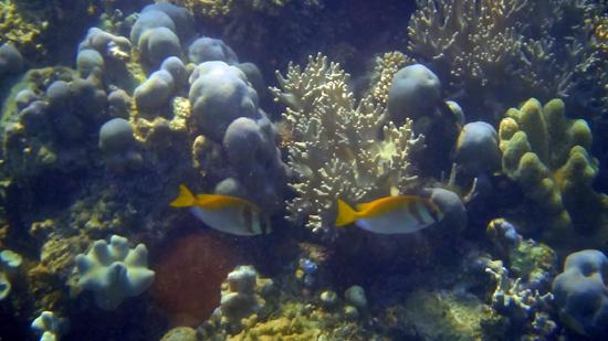 biota laut aneka warna khas Indonesia timur