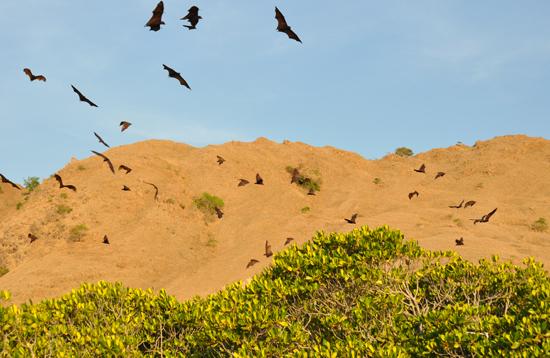Pulau Kelelawar - Taman Nasional Komodo