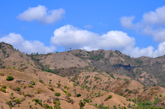 bukit savana di Pulau Komodo