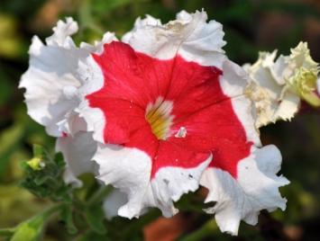 bunga kertas