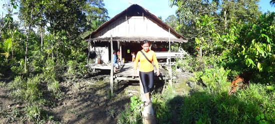 Umai, rumah tradisional Mentawai