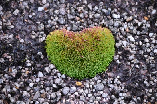Jejak Hati Alam - Habema