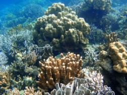 dunia bawah laut Pulau Kelagian Kecil