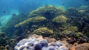 dunia bawah laut Tanjung Putus