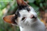 kucing peliharaan Pak Jasim