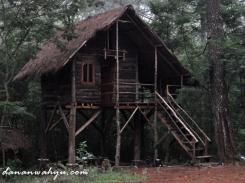 rumah pohon dibangun dari pinus tumbang, bukan ditebang