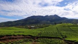 rumah gadang di Koto Anau menghadap ke gunung Talang