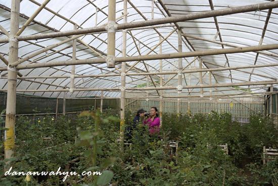 kebun bunga mawar di dekat Kavling Stroberi