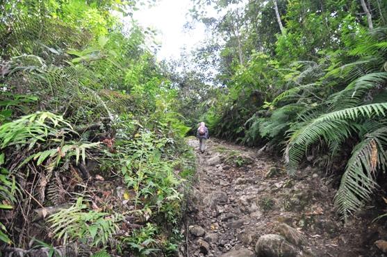 setelah melewati kebun warga memasuki Kawasan Taman Nasional Kerinci Seblat (TNKS)