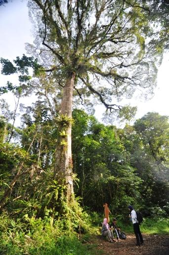pos satu - pohon besar dengan dahan mirip akar terbalik