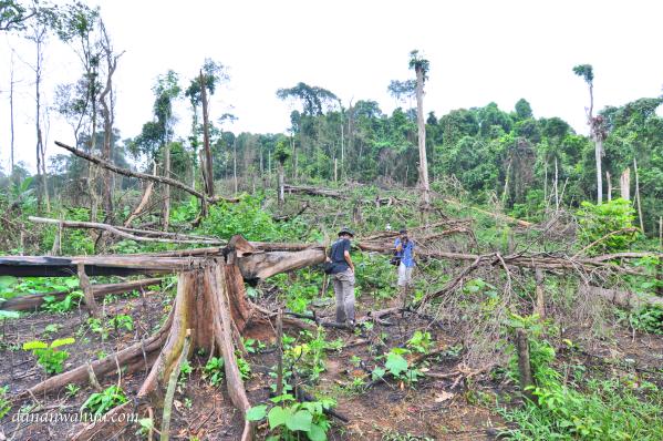 lembah penuh dengan sisa penebangan pohon