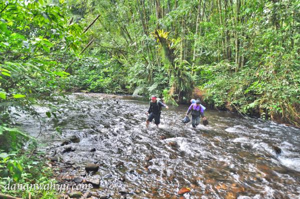 eksotis rimba Sumatra di bukit barisan