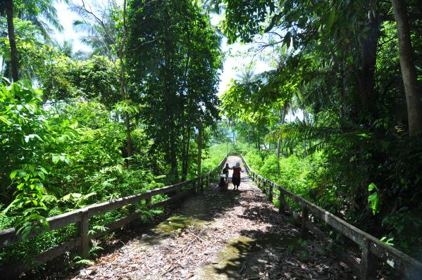 pengalaman menyusuri hutan tropis di Sikuai