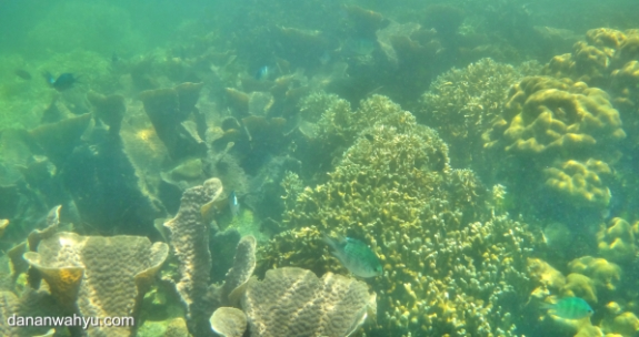 pesona dunia bawah laut Batu Mandi