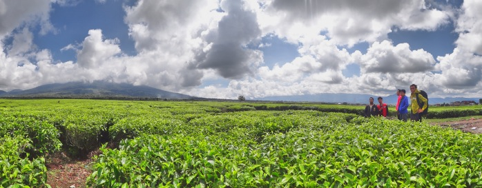 berpose ala boyband dengan panorama kebun teh dan gunung Kerinci