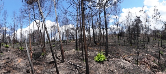 pohon terbakar di Teluk Dalam